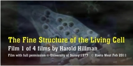 Stills from Harold Hillman's films, including 'The Living Cell'